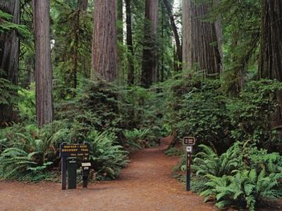 Trailhead into Redwood Forest