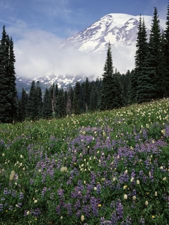 Wildflowers in Meadow Below Mt. Rainier