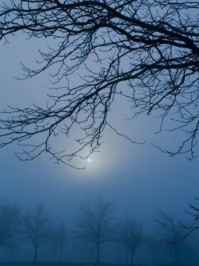 Fog and Tree Silhouette in Morning by James Shive