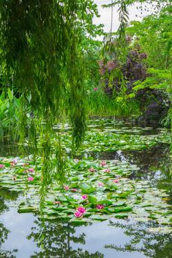 Weeping Willow and Waterlilies, Monet's Garden, Giverny, Normandy, France, Europe by James Strachan