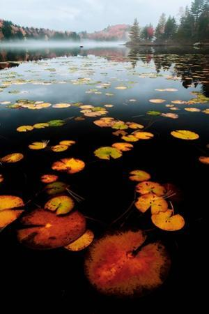 Lily Pad Colors by James Volosin