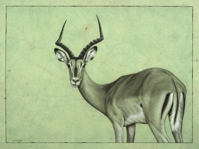 Impala by James W. Johnson