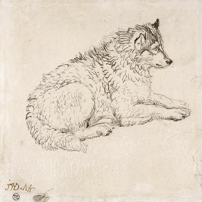 Arctic Dog, Facing Right (Pencil on Paper)