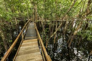 A wooden walkway at a jungle lodge above the Amazon River, Manaus, Brazil by James White