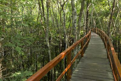 A wooden walkway at a jungle lodge above the Amazon River, Manaus, Brazil