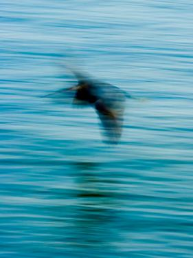 Egret Flying in Blur Caused by Slow Shutter Speed by James White