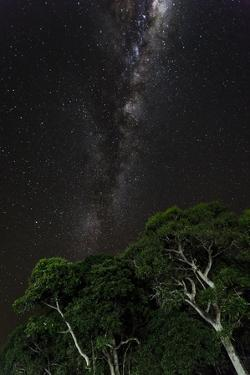 Light painted tree in the foreground with the Milky Way Galaxy in the Pantanal, Brazil by James White