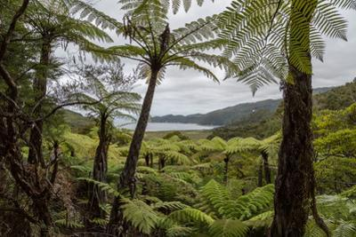 Tree Fern Forest Above the Coast of Abel Tasman NP, New Zealand by James White