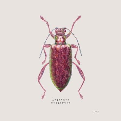 Adorning Coleoptera VI Sq Claret by James Wiens