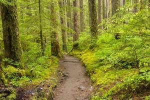Wa, Olympic National Park, Sol Duc Valley, Forest Trail by Jamie And Judy Wild