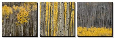 Aspen Trees by Jamie Cook