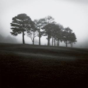 Fog Tree Study 2 by Jamie Cook