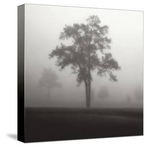 Fog Tree Study I by Jamie Cook