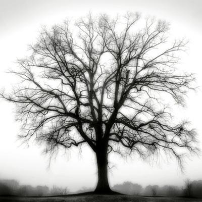 Fountain Oak by Jamie Cook