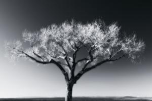 Glowing Tree by Jamie Cook