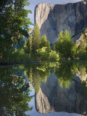 El Capitan reflected in Merced River. Yosemite National Park, CA by Jamie & Judy Wild