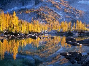 Golden Larch Trees Reflected in Leprechaun Lake, Enchantment Lakes, Alpine Lakes Wilderness by Jamie & Judy Wild