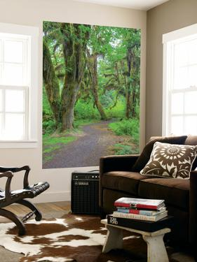 Hall of Mosses, Hoh Rain Forest, Olympic National Park, Washington, USA by Jamie & Judy Wild