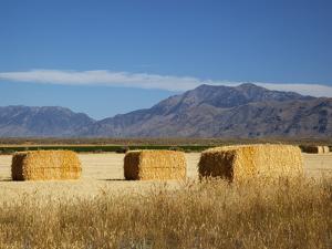 Hay Bales, Butte County, Idaho, USA by Jamie & Judy Wild