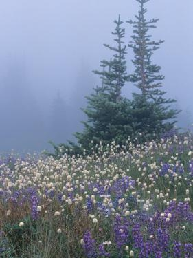 Lupine and Bistort Meadow, Hurricane Ridge, Olympic National Park, Washington, USA by Jamie & Judy Wild
