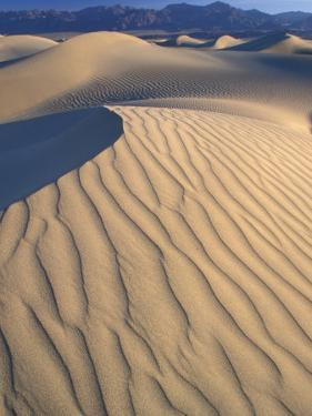 Mesquite Flats Sand Dunes with Wind Ripples at Sunrise, Death Valley National Park, California, USA by Jamie & Judy Wild