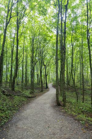Michigan, Pictured Rocks National Lakeshore, trail to Miners Falls