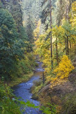 North Fork Silver Creek, Silver Falls State Park, Oregon, USA by Jamie & Judy Wild