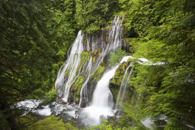 Panther Creek Falls, Waterfall from Big Creek, Gifford Pinchot National Forest, Washington, USA by Jamie & Judy Wild