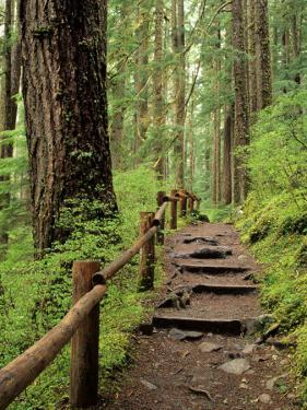 Rainforest with Trail, Sol Duc Valley, Olympic National Park, Washington, USA by Jamie & Judy Wild