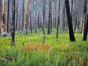 Sawtooth National Forest, Sawtooth National Recreation Area, Idaho, USA by Jamie & Judy Wild