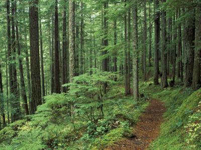 Silver Falls Trail, Mt. Rainier National Park, Washington, USA by Jamie & Judy Wild