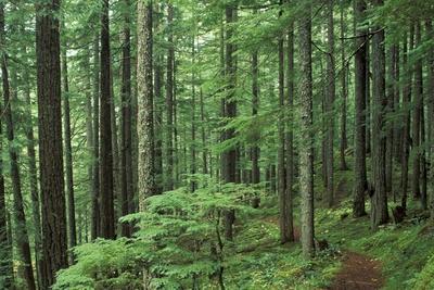 Silver Falls Trail, Mt. Rainier National Park, Washington, USA