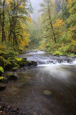 Tanner Creek, Columbia River Gorge, Oregon, USA by Jamie & Judy Wild