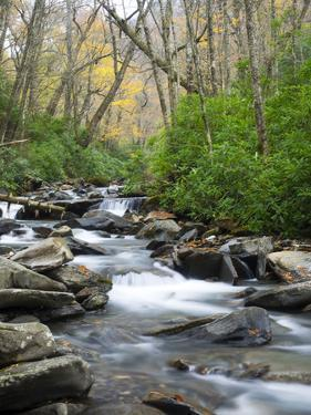 Tennessee, Great Smoky Mountains National Park, Alum Cave Creek by Jamie & Judy Wild