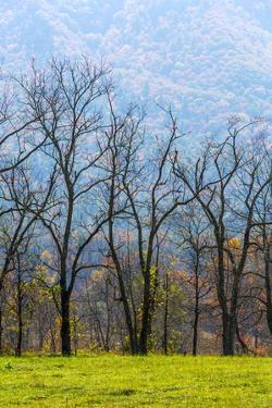 Tennessee, Great Smoky Mountains National Park, Cades Cove by Jamie & Judy Wild