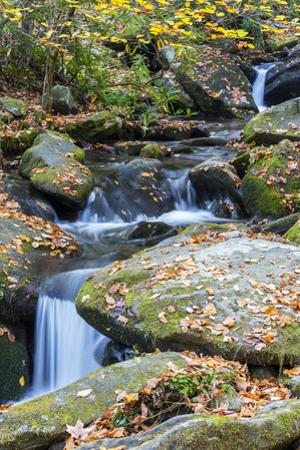 Tennessee, Great Smoky Mountains NP, Roaring Fork River by Jamie & Judy Wild