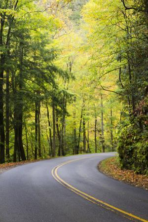 Tennessee, Great Smoky Mountains NP, View Along Little River Road by Jamie & Judy Wild