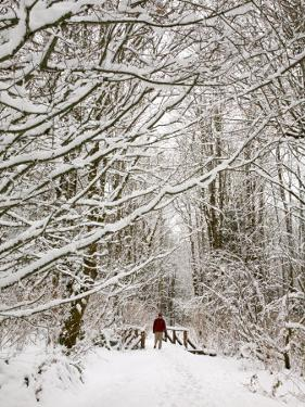 Trail and Hiker in Winter, Tiger Mountain State Forest, Washington, USA by Jamie & Judy Wild
