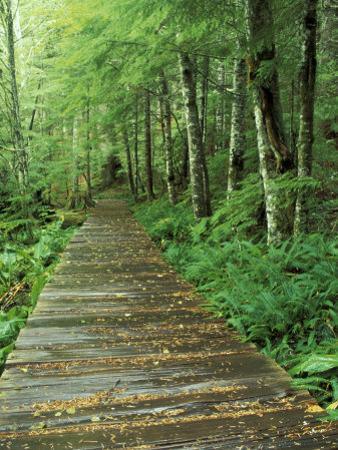 Trail of the Shadows, Mt. Rainier National Park, Washington, USA by Jamie & Judy Wild