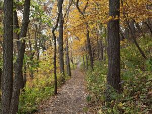 Trail to Great Bear and Little Bear Mound, Effigy Mounds National Monument, Iowa, USA by Jamie & Judy Wild