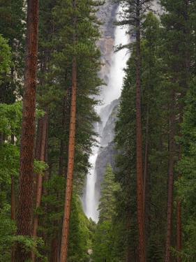 Upper and Lower Yosemite Falls. Yosemite National Park, CA by Jamie & Judy Wild