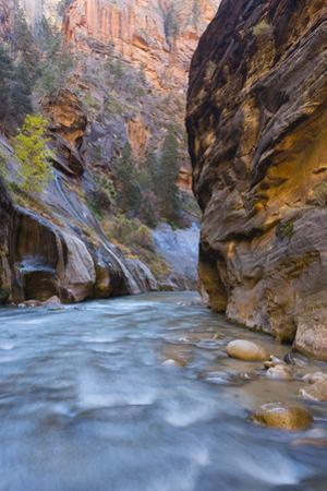 USA, Utah, Zion National Park. the Narrows of the Virgin River by Jamie & Judy Wild