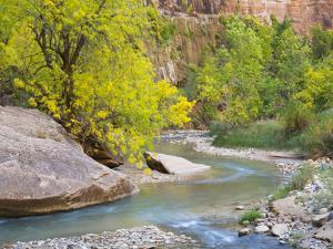 USA, Utah. Zion National Park, Virgin River by Jamie & Judy Wild