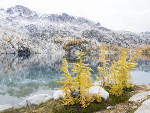 USA, Washington. Alpine Lakes Wilderness, Enchantment Lakes, Golden Larch trees at Perfection Lake by Jamie & Judy Wild