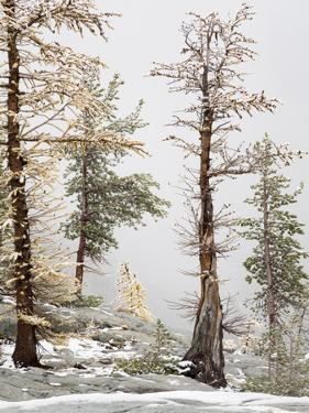 USA, Washington State. Alpine Lakes Wilderness, Enchantment Lakes, Larch and Fir trees by Jamie & Judy Wild