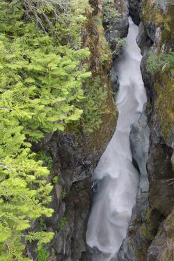 USA, Washington State. Mount Rainier National Park, Cowlitz River in Box Canyon by Jamie & Judy Wild