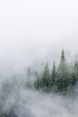 USA, Washington State. Mount Rainier National Park, Fir Trees in Clouds by Jamie & Judy Wild