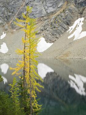 USA, Washington State. Okanogan-Wenatchee National Forest, Larch trees, at Blue Lake by Jamie & Judy Wild