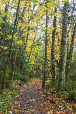 USA, Washington, Tiger Mountain Trail. by Jamie & Judy Wild