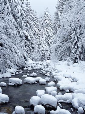 WA, Mount Baker-Snoqualmie National Forest, Cascade Mountains, Denny Creek with fresh snow by Jamie & Judy Wild